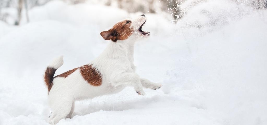 Schneegastritis