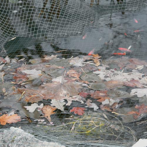 Laguna teich netz schwarz for Teichfische schwarz