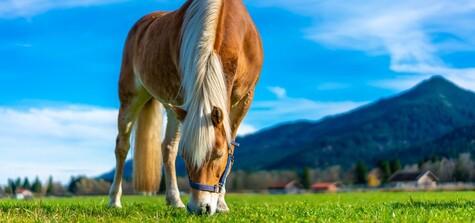 Haustier Mit Ps Grundausstattung Bei Der Pferdehaltung