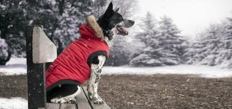 75b9999497e5 Trendige Winterbekleidung hat einen Namen  Canada Pooch!